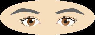 目と目の間が狭い
