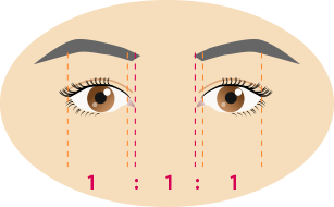 目の横幅の黄金比率