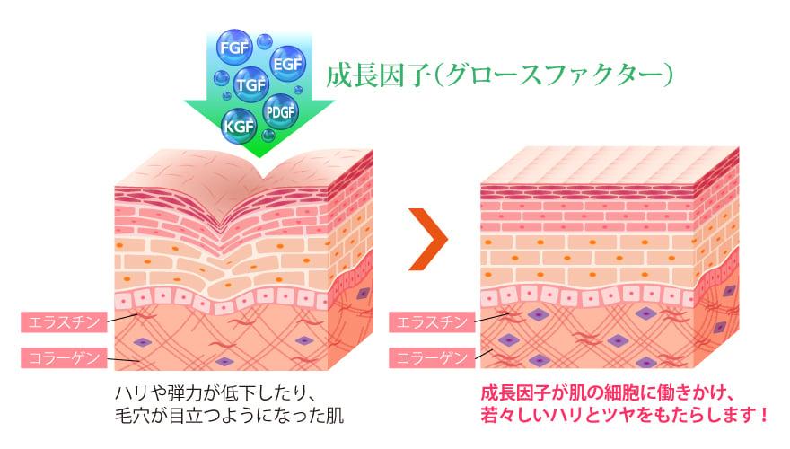 老化した細胞を若返らせるスイッチ グロースファクター(成長因子)とは