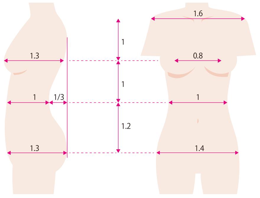 体型の美の黄金比率