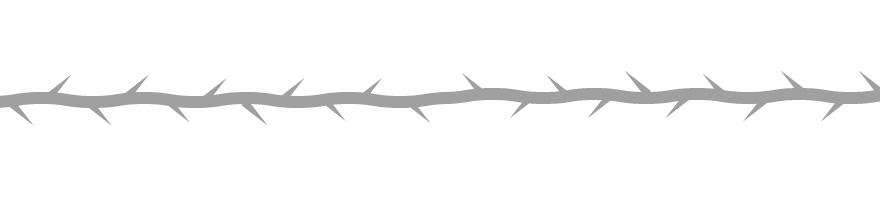糸の形・トゲのつき方