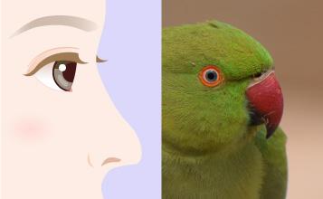 オウム鼻変形(pollybeak deformity)